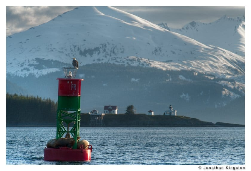 A bald eagle and sea lions on a buoy in front of the Point Retreat lighthouse near Juneau, Alaska.